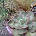 Cayucos, CA - Potted Garden